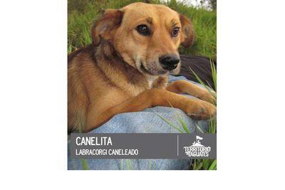 Canelita is still just a puppy.