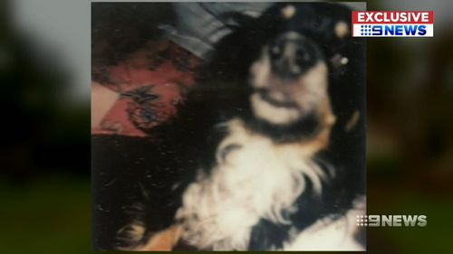 Sue's dog Buster was killed during a violent home invasion.