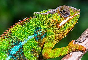 Daily Quiz: What type of reptile is illustrated here?