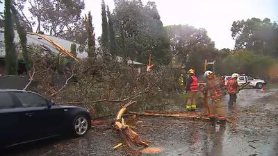 Emergency crews work to clear the tree. (9NEWS)