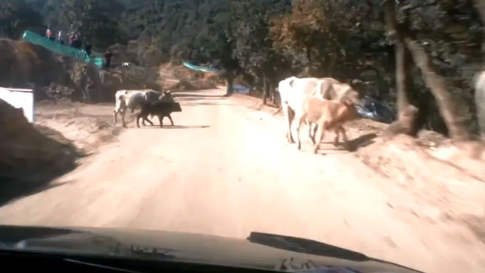 Rally car champion speeds upon im-moo-vable object