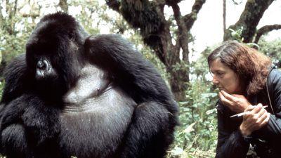 Gorillas are gentle