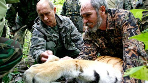 Vladimir Putin's Siberian tiger blamed for China goat deaths
