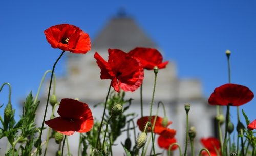 The poppy flower is a symbol of remembrance for the fallen.