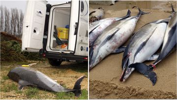 1100 dolphin carcasses have washed up on France's coast since January, prompting calls for something to be done about fishing in the area.