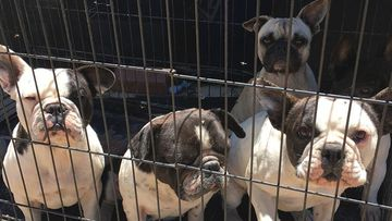 More than 70 animals removed from 'designer pets' breeding property