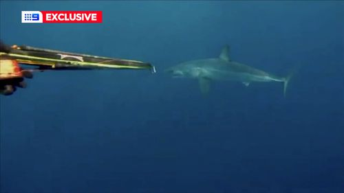 A mako shark just metres from a spear fisherman.