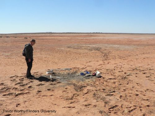 Paleontologists from Adelaide's Flinders University unearthed the fossil in March 2016 on a remote outback cattle station during a research trip at Lake Pinpa in South Australia.