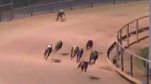 The race, to be held at Wentworth Park in Sydney, will be the richest greyhound race in the world. Picture: Supplied.