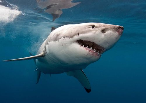 Australia recorded the second-highest tally of shark attacks worldwide last year.