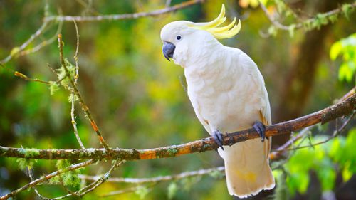 Elderly man charged after allegedly shooting cockatoo