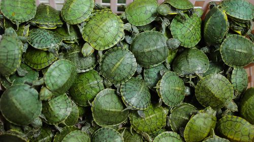 More than 5000 turtles seized in luggage at Kuala Lumpur airport