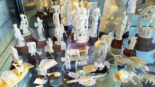 Ivory items for sale, such as this collection at a Gold Coast antique store could soon become illegal if a ban is introduced by the Australian government. Photo: For the Love of Wildlife.