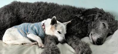 Australia's oldest dog, 21-year-old Trixie