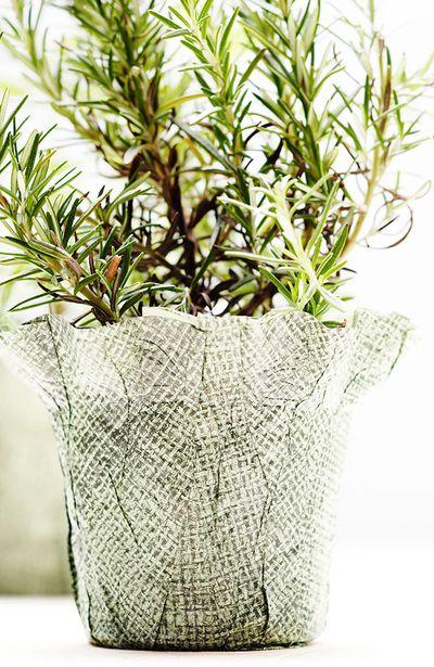 1. Rosemary