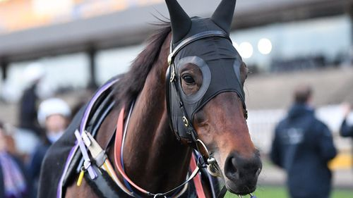 Cox Plate 2017 is Winx's Grand Final. (AAP)