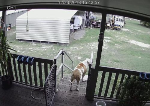 Security footage shows Bruno's attention caught by something just before he runs off-camera.