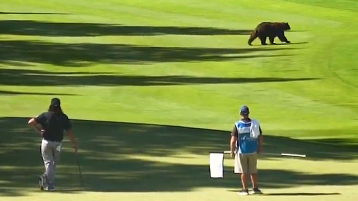 Black bear crashes PGA Tour's Barracuda Championship