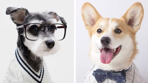 Remix the Dog and Mr Geordi La Corgi
