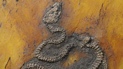 The fossils were found in a quarry that was have been an ancient lake millions of years ago.