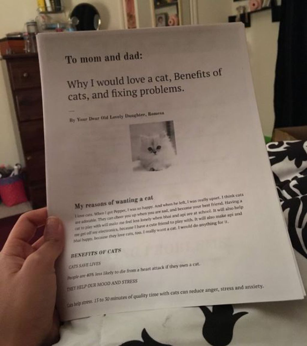 year old writes six page essay to convince parents she needs a cat titled why i would love a cat benefits of cats and fixing problems the neatly typed report explains all the reasons why romesa ought to be given a