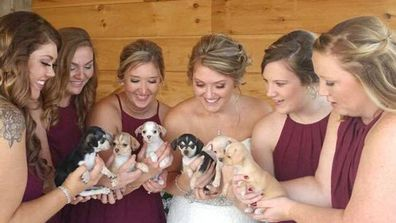 Samantha Clark's wedding puppies from a rescue shelter