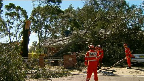 A gum tree has fallen over the roof of a house in Riverwood in the city's southwest. (9NEWS)