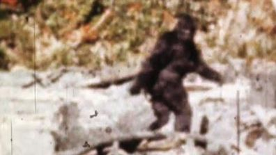 Click through to see some of the most unconvincing, or unconvincing Bigfoot videos.