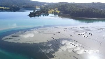 major boost for the south coast oyster industry