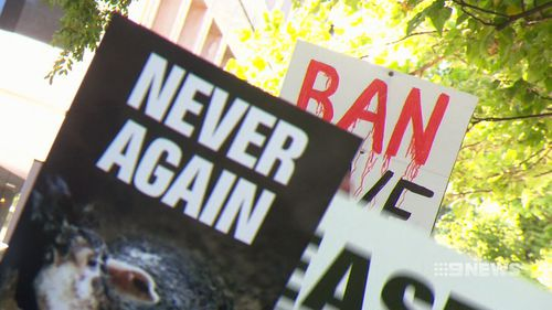 Australians have been left outraged after 60 Minutes revealed shocking animal cruelty in the export industry. (9NEWS)