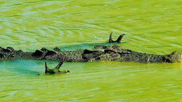 Spirit fingers crocodile