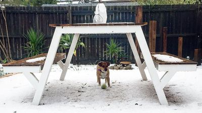 This dog was still eager to play outside, but used a picnic table for cover. (Instagram: @pilateswithnikki)