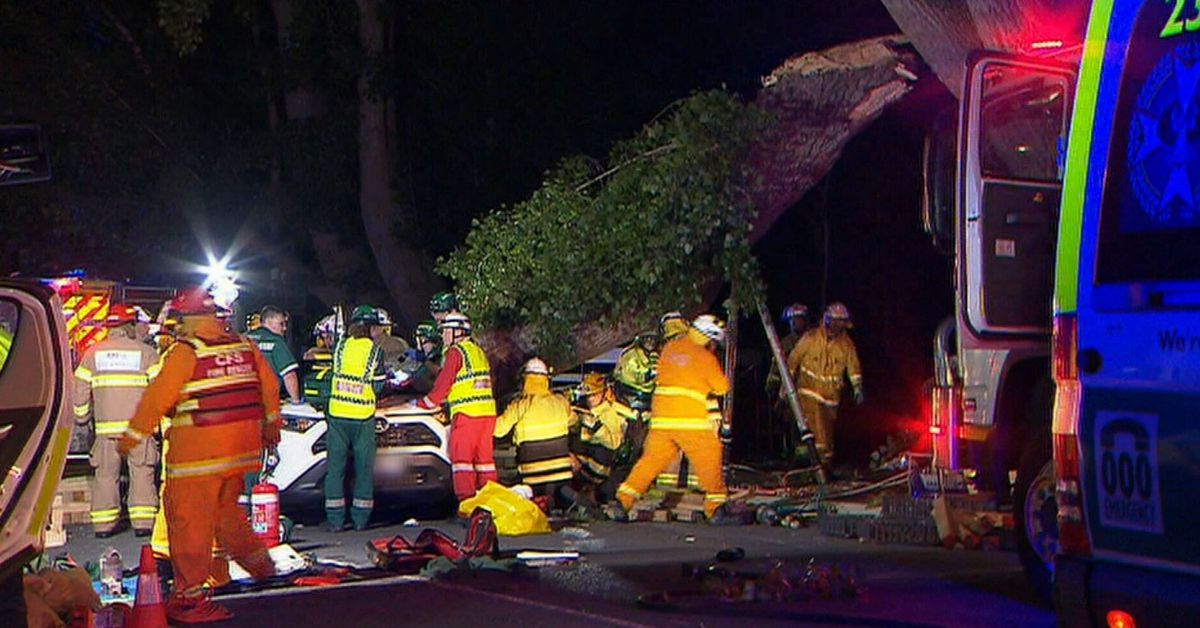 Woman killed as tree branch falls on her car following severe storms in Adelaide – 9News