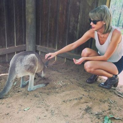 Kangaroo whispering didn't seem to be Taylor's calling...