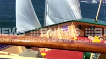 Shocking moment ferry and yacht collide in Sydney Harbour