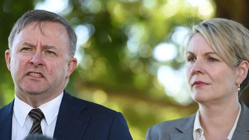 Anthony Albanese and Tanya Plibersek are the frontrunners for opposition leader.