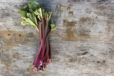 <strong>Rhubarb</strong>