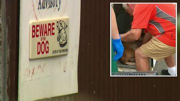 Sydney staffordshire terrier dog attack