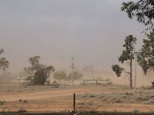 Di Hall's farm is one of those devastated by lack of rain.