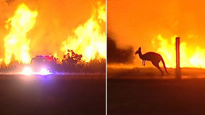 Roos flee as bushfire burns