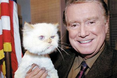 Stars and their cute kitties!<br/><br/>Funny looking cat