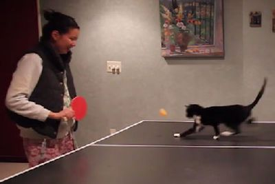 Feisty cat changes ping-pong forever