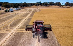 China halts barley imports from Australian grain giant in fresh blow to farmers
