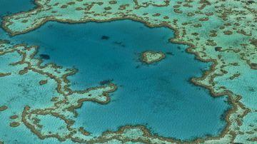 Man bitten by shark at Great Barrier Reef