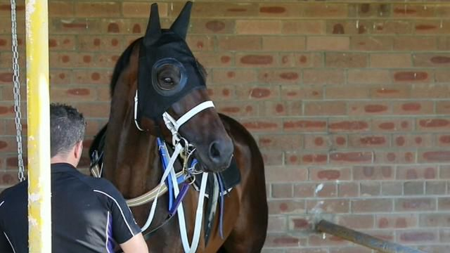 Winx rated amongst world's best