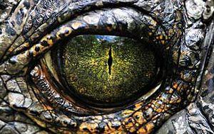 US woman discovers alligators fighting at front door