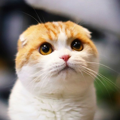 Waffles the cat (932,000 followers on Instagram)