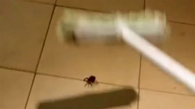 "<p>With a few thumps of his broom a South Australian man has managed to unleash an arachnophobe's worst nightmare inside his home.</p><p> Video posted online on April 12 by Danny Ford shows a large wolf spider on the floor of his Hallett Cove house, south of Adelaide. </p><p> Mr Ford quickly seals the fate of the spider by whacking it several times with the broom, but it's what happens next that is unexpected. </p><p> Hundreds of baby spiders suddenly rush from the body of the mother spider, running in all directions. </p><p> ""Jesus, look at the all baby spiders,"" Mr Ford exclaims as a woman gasps in the background. </p><p> Click through this gallery to see more terrifying spider encounters. </p><p> </p>"