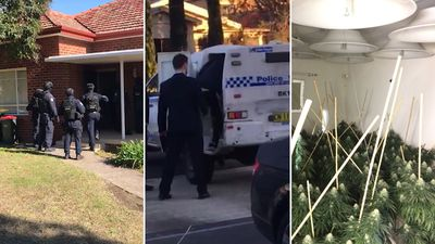 'Organised crime gang' dismantled in $6.2m cannabis bust