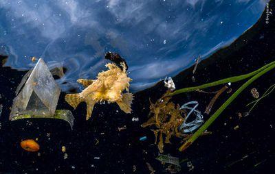 Life Among Litter by Greg Lecoeur